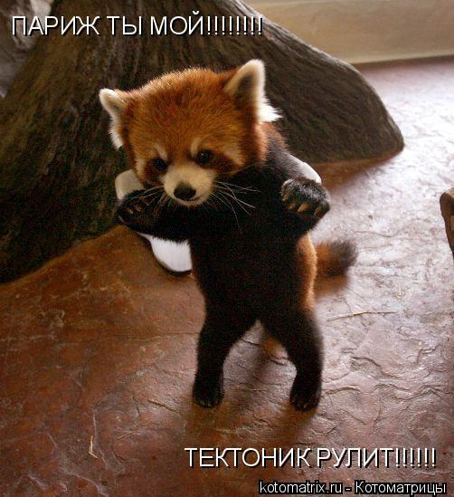 Котоматрица: ПАРИЖ ТЫ МОЙ!!!!!!!! ТЕКТОНИК РУЛИТ!!!!!!