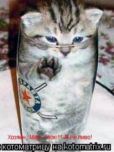 Котоматрица: Хозяин, Мать Твою!!! Я Не пиво!
