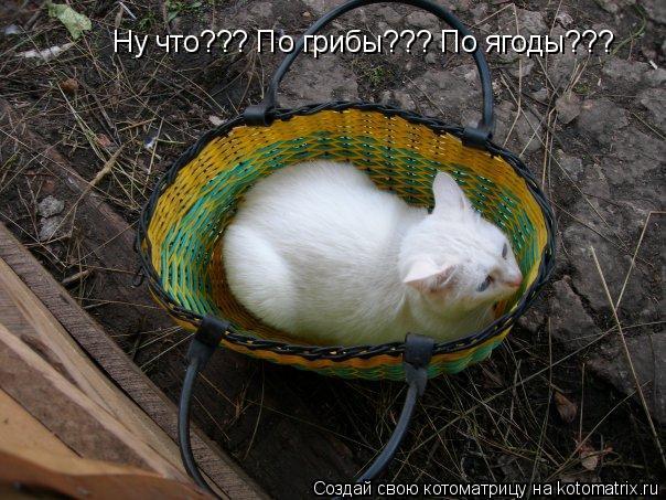 Котоматрица: Ну что??? По грибы??? По ягоды???