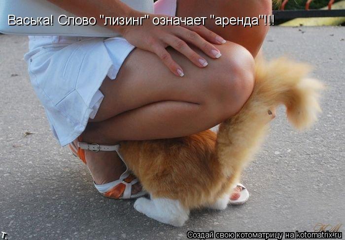 "Котоматрица: Васька! Слово ""лизинг"" означает ""аренда""!!!"
