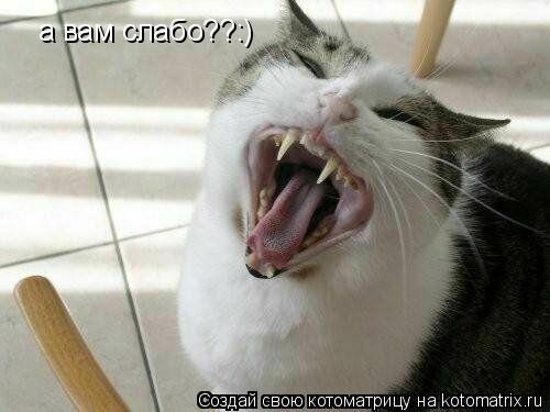 Котоматрица: а вам слабо??:)