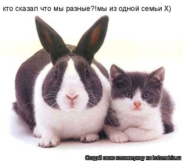 Котоматрица: кто сказал что мы разные?!мы из одной семьи Х)