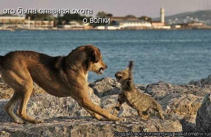 Котоматрица: это была славная охота о волки