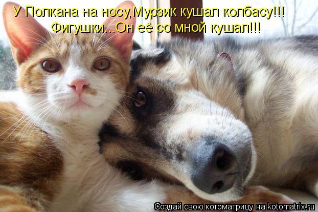 Котоматрица: У Полкана на носу,Мурзик кушал колбасу!!! Фигушки...Он её со мной кушал!!!