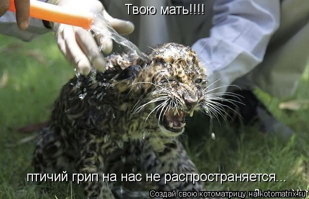 Котоматрица: Твою мать!!!! птичий грип на нас не распространяется...