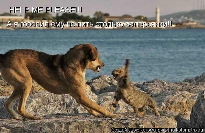 Котоматрица: HELP ME PLEASE!!!  А я говорил ему не пить столько валерьянки!!