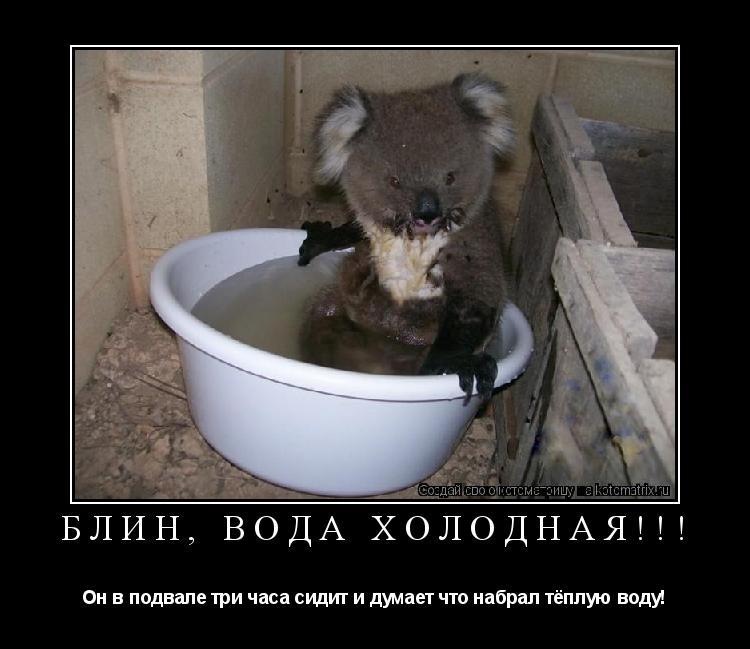 Котоматрица: Блин, вода холодная!!! Он в подвале три часа сидит и думает что набрал тёплую воду!