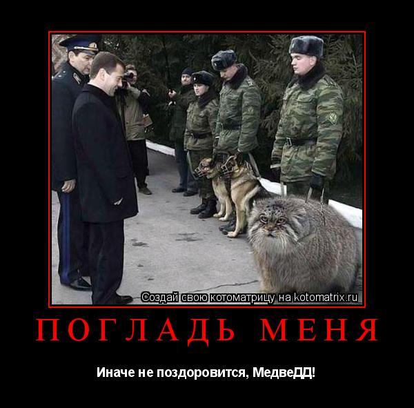 Котоматрица: Погладь меня Иначе не поздоровится, МедвеДД!