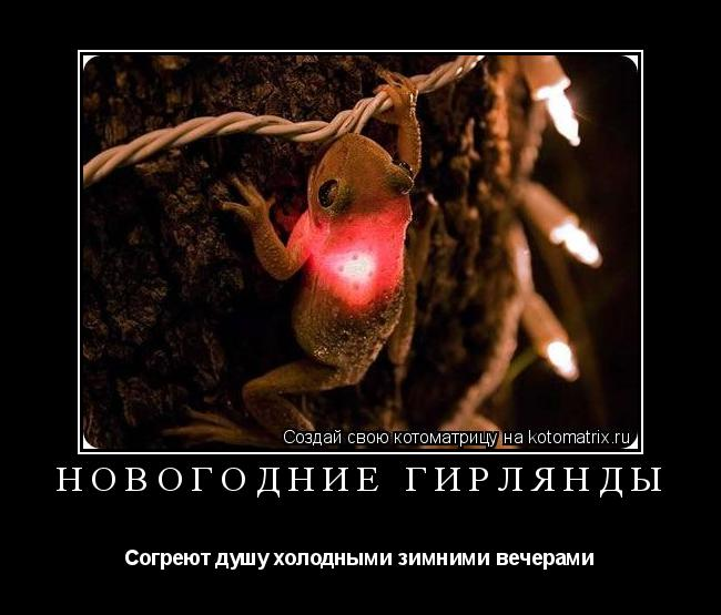 Котоматрица: НОВОГОДНИЕ ГИРЛЯНДЫ Согреют душу холодными зимними вечерами