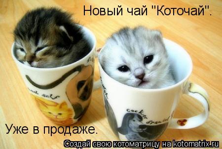 """Котоматрица: Новый чай """"Коточай"""". Уже в продаже."""