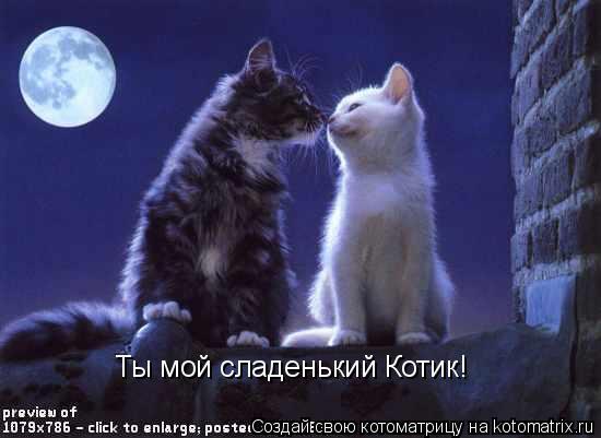 Котоматрица: Ты мой сладенький Котик!