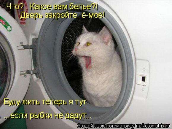 Котоматрица: Что?.. Какое вам белье?! Дверь закройте, ё-моё! Буду жить теперь я тут. ...если рыбки не дадут...