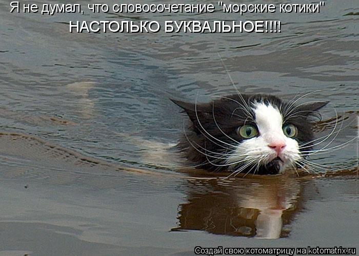 """Котоматрица: Я не думал, что словосочетание """"морские котики"""" НАСТОЛЬКО БУКВАЛЬНОЕ!!!!"""
