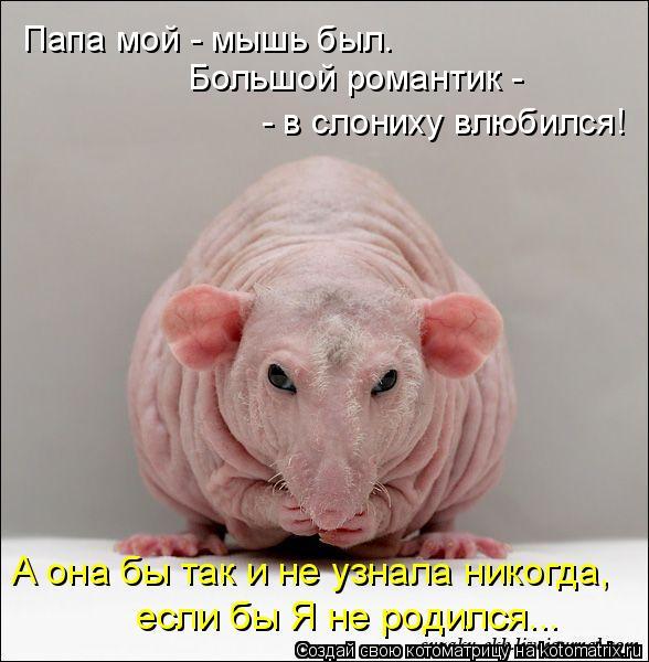 Котоматрица: Папа мой - мышь был.  Большой романтик -  - в слониху влюбился! А она бы так и не узнала никогда, если бы Я не родился...