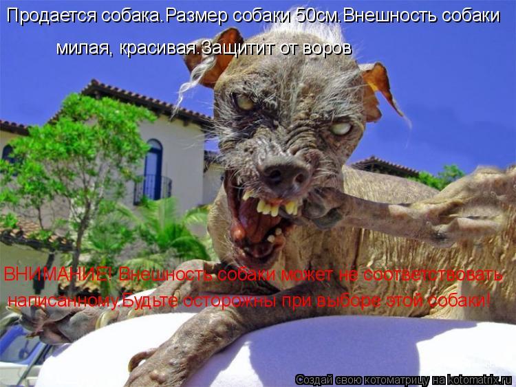 Котоматрица: Продается собака.Размер собаки 50см.Внешность собаки  милая, красивая.Защитит от воров ВНИМАНИЕ! Внешность собаки может не соответствовать
