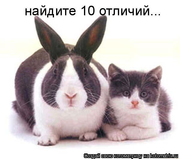 Котоматрица: найдите 10 отличий...