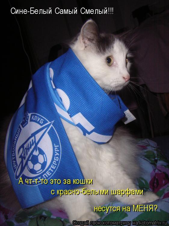 Котоматрица: Сине-Белый Самый Смелый!!! А чт-т-то это за кошки  с красно-белыми шарфами несутся на МЕНЯ?