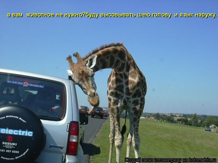 Котоматрица: а вам  животное не нужно?буду высовывать шею,голову  и язык наружу.