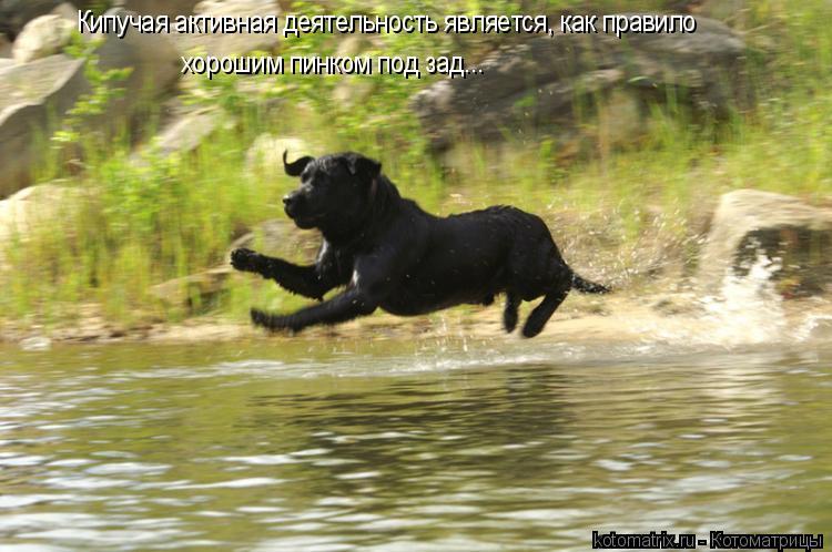 Котоматрица: Кипучая активная деятельность является, как правило хорошим пинком под зад...