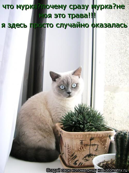Котоматрица: что мурка?почему сразу мурка?не  моя это трава!!! я здесь просто случайно оказалась