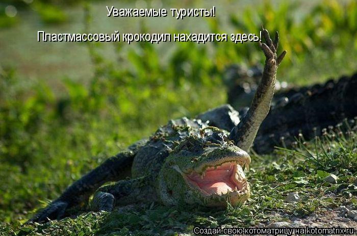 Котоматрица: Уважаемые туристы! Пластмассовый крокодил нахадится здесь!