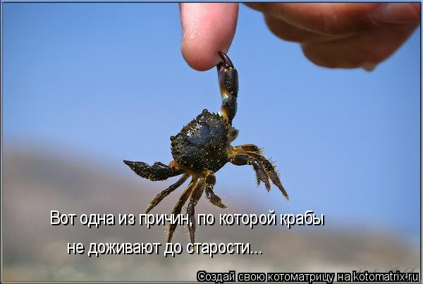 Котоматрица: Вот одна из причин, по которой крабы  не доживают до старости...