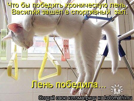 Котоматрица: Что бы победить хроническую лень, Василий зашёл в спортивный  зал. Лень победила...