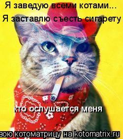 Котоматрица: Я заведую всеми котами... Я заставлю съесть сигарету кто ослушается меня