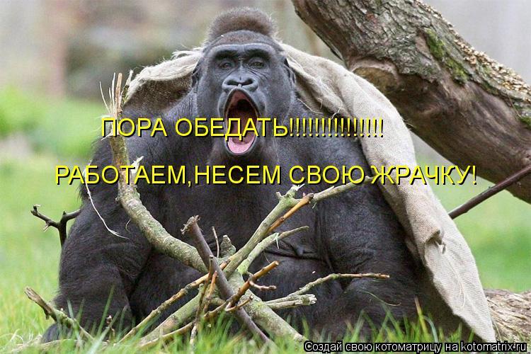 Котоматрица: ПОРА ОБЕДАТЬ!!!!!!!!!!!!!!! РАБОТАЕМ,НЕСЕМ СВОЮ ЖРАЧКУ!