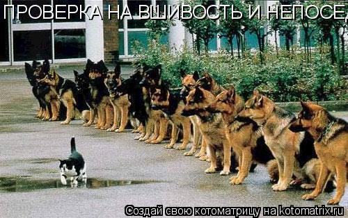 Котоматрица: ПРОВЕРКА НА ВШИВОСТЬ И НЕПОСЕДЛИВОСТЬ!!!