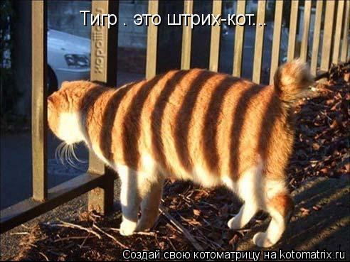 Котоматрица: Тигр – это штрих-кот...