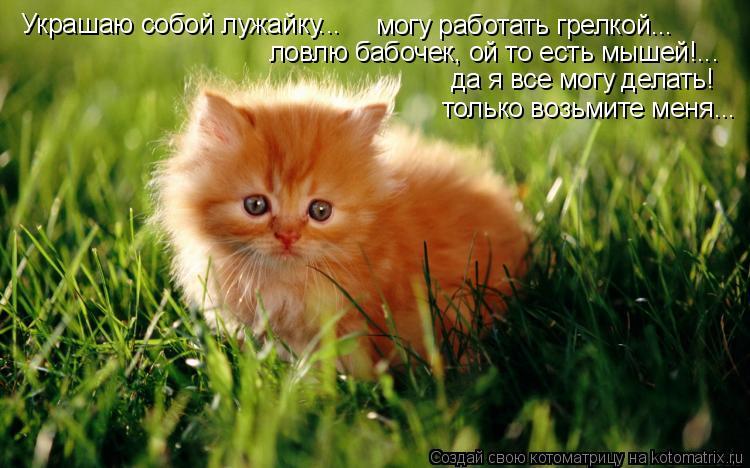 Котоматрица: Украшаю собой лужайку...    могу работать грелкой...    ловлю бабочек, ой то есть мышей!...    да я все могу делать! только возьмите меня...