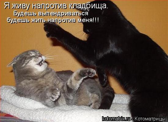 Котоматрица: Я живу напротив кладбища.  Будешь выпендриваться  будешь жить напротив меня!!!