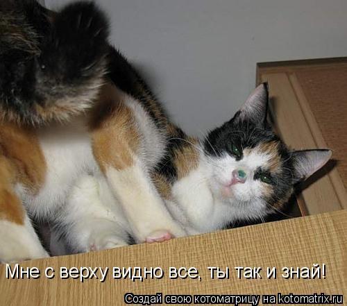 Котоматрица: Мне с верху видно все, ты так и знай!