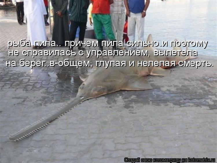 Котоматрица: глядите-рыба пила! я не пила,я обкурилась... бли-ин... ик...
