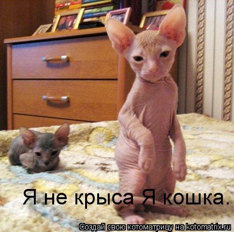 Котоматрица: Я не крыса Я кошка.