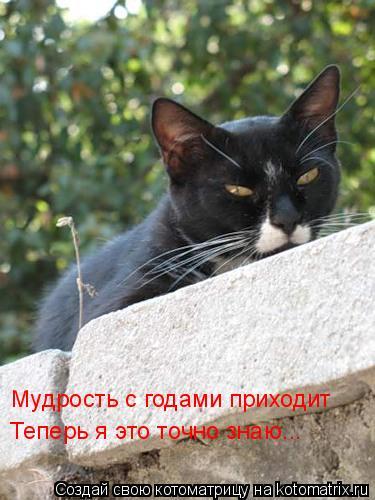 Котоматрица: Мудрость с годами приходит Теперь я это точно знаю...