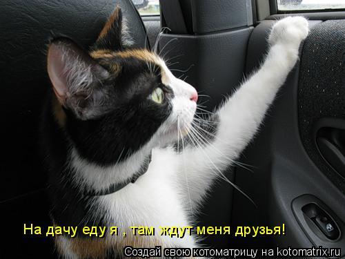 Котоматрица: На дачу еду я , там ждут меня друзья!