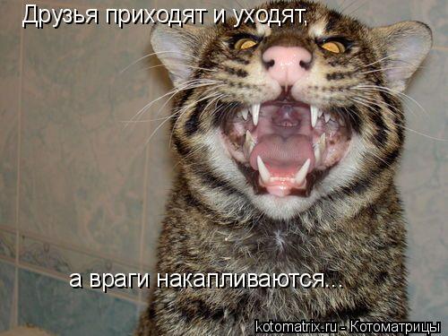 Котоматрица: Друзья приходят и уходят,  а враги накапливаются...