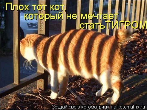 Котоматрица: Плох тот кот,  который не мечтает  статьТИГРОМ.