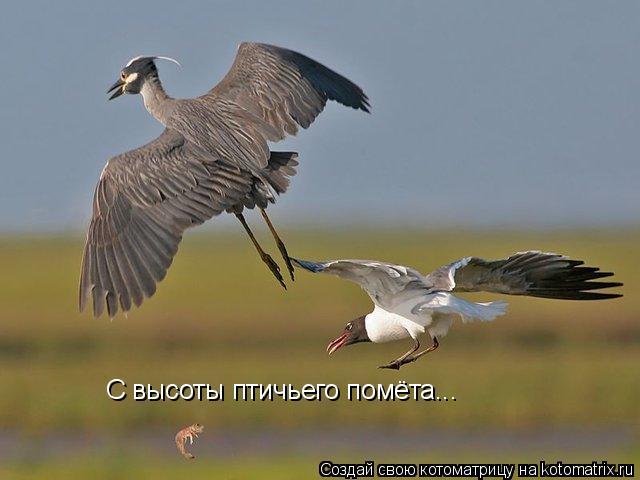 Котоматрица: С высоты птичьего помёта...