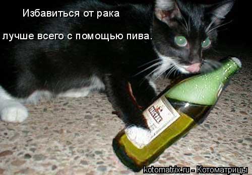 Котоматрица: Избавиться от рака  лучше всего с помощью пива.