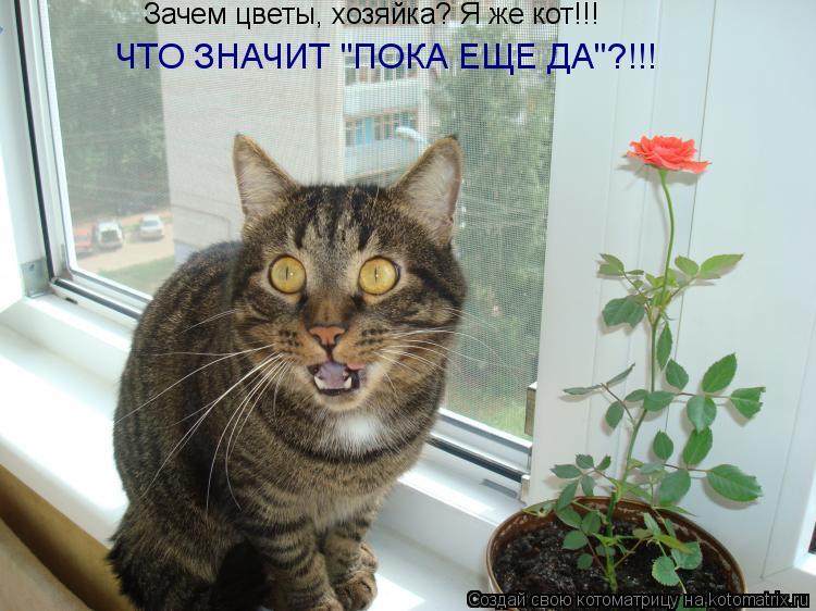 """Котоматрица: Зачем цветы, хозяйка? Я же кот!!! ЧТО ЗНАЧИТ """"ПОКА ЕЩЕ ДА""""?!!!"""