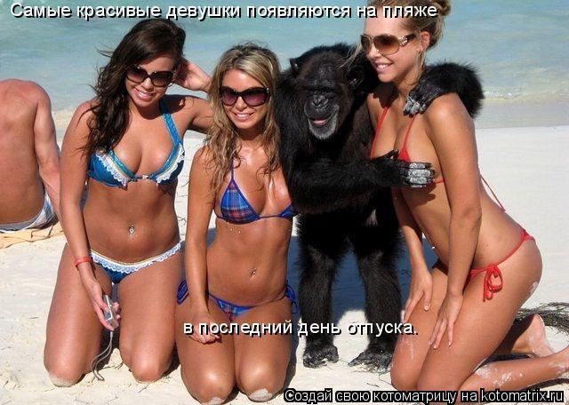 Котоматрица: Самые красивые девушки появляются на пляже  в последний день отпуска.