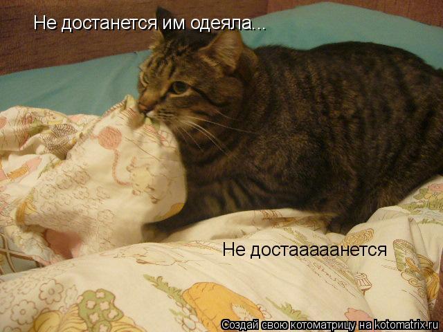Котоматрица: Не достааааанется  Не достанется им одеяла...