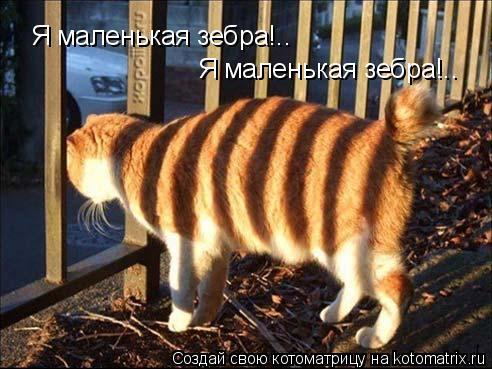 Котоматрица: Я маленькая зебра!.. Я маленькая зебра!..