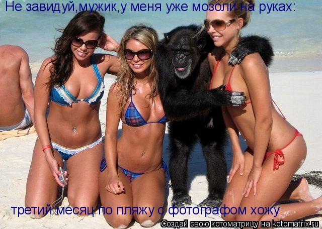 Котоматрица: Не завидуй,мужик,у меня уже мозоли на руках: третий месяц по пляжу с фотографом хожу