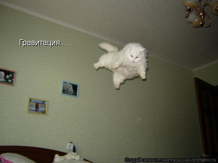 Котоматрица: Гравитация......
