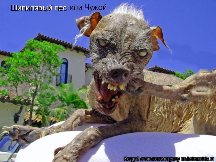 Котоматрица: Шипилявый пес или Чужой