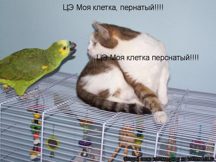 Котоматрица: ЦЭ Моя клетка перснатый!!!! ЦЭ Моя клетка, пернатый!!!!